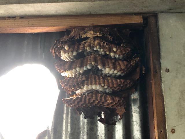 壁の中の蜂の巣 2019.7.17
